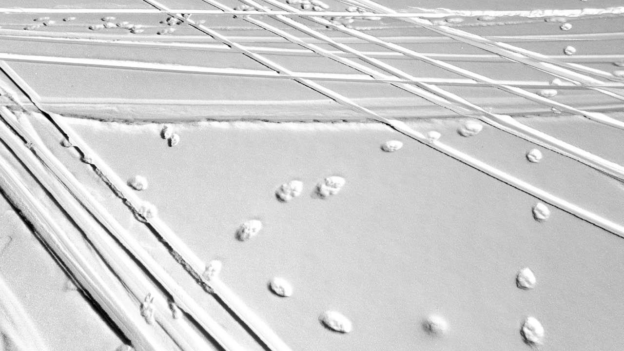 Trond Solvang // Spor i snø
