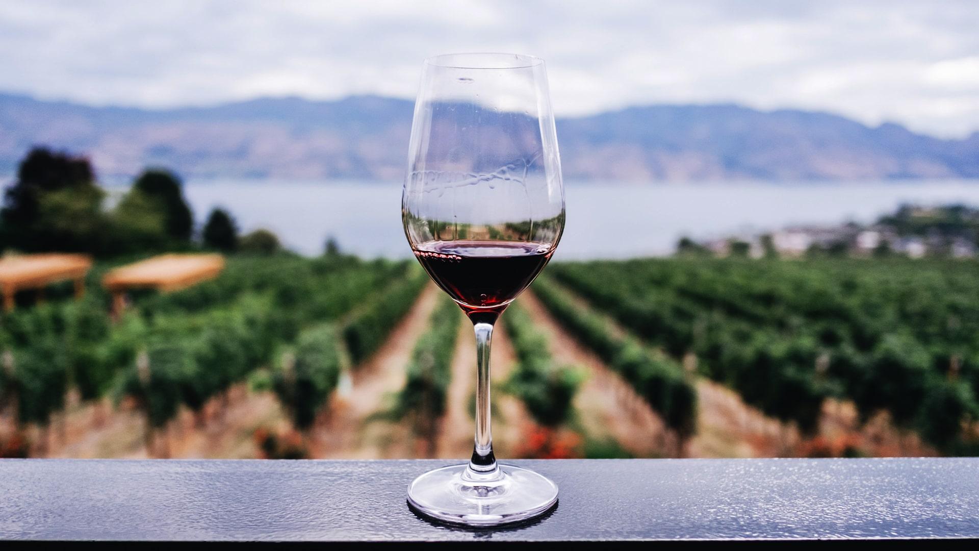 A digital taste of Pinot Noir